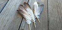 Красивые неокрашенные перышка, цвет - серый с белым, 10-12 см., 5 шт.,, 15 грн.