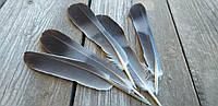 Натуральное перо, 10-12 см., 5 шт.,, 15 грн.