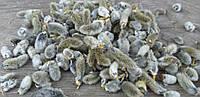 Вербные котики - натуральный декор, упаковка 20 гр.