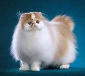 Стерилизация кошки, уход и содержание после.
