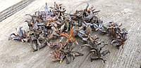 Маленькие натуральные шишки туи, около 230 шт., 20 гр.