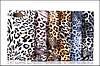 "SONY Z3 mini compact D5803 XPERIA чехол книжка фактурный для телефона "" iCASE CAVALLI "" , фото 2"