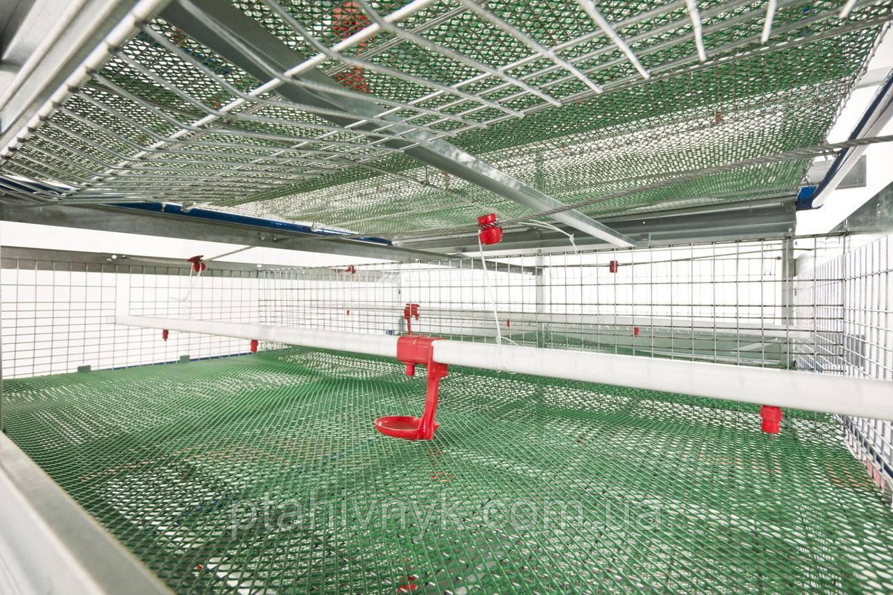 Клеточное оборудование для выращивания перепелов