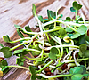 РОСТКИ  РЕДИС ПРОРОСТКИ, микрогрин микрозелень редиса органические Sadove 50 г