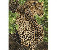 "Картина по номерам ""Леопард"""