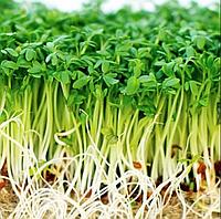РОСТКИ  КРЕСС САЛАТ ПРОРОСТКИ, микрогрин микрозелень зелень органические Sadove 50 г