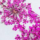Сухоцветы, комплект, фото 2