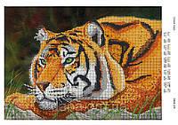 """Схема для частичной вышивки бисером """"Спокойствие тигра"""""""