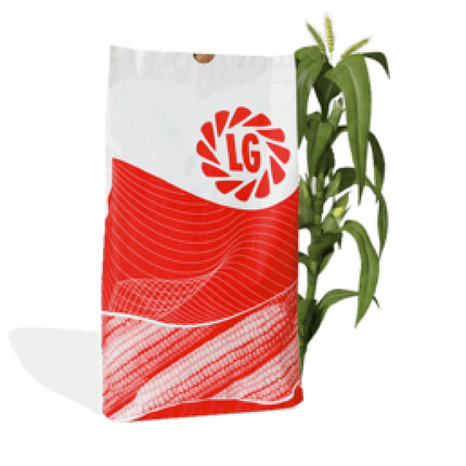 Гибрид кукурузы Лимагрейн Адэвей Пончо ФАО 290, фото 2