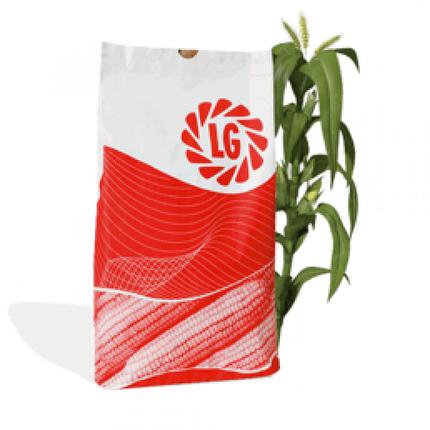 Гибрид кукурузы Лимагрейн ЛГ 3350 Пончо ФАО 350, фото 2