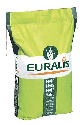 Гибрид кукурузы Euralis Кроссман ЕС Пончо ФАО 240, фото 2