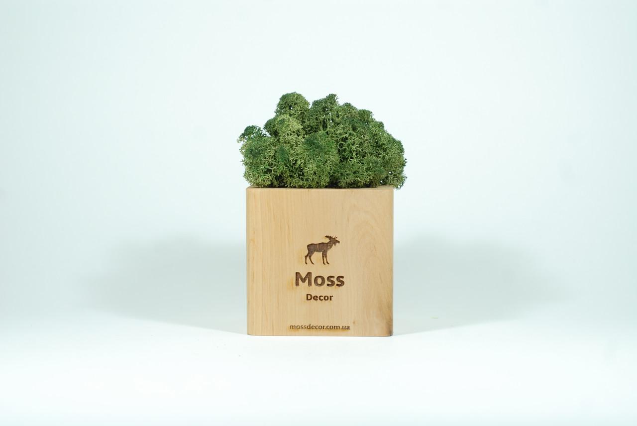 Брендированный экосувенир Moss Cube (светлое дерево) мох 54