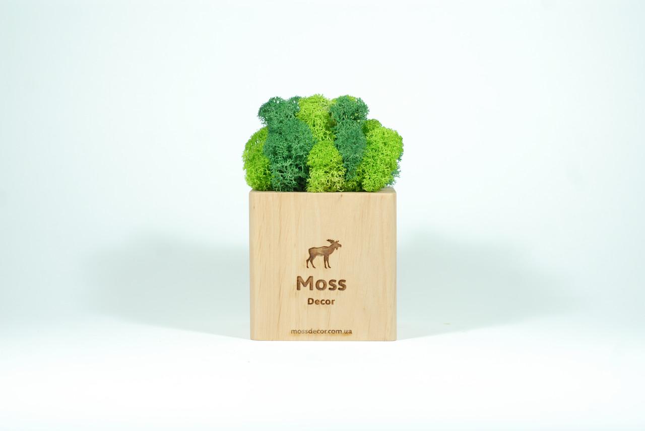 Брендированный экосувенир Moss Cube (светлое дерево) мох 79 + 78