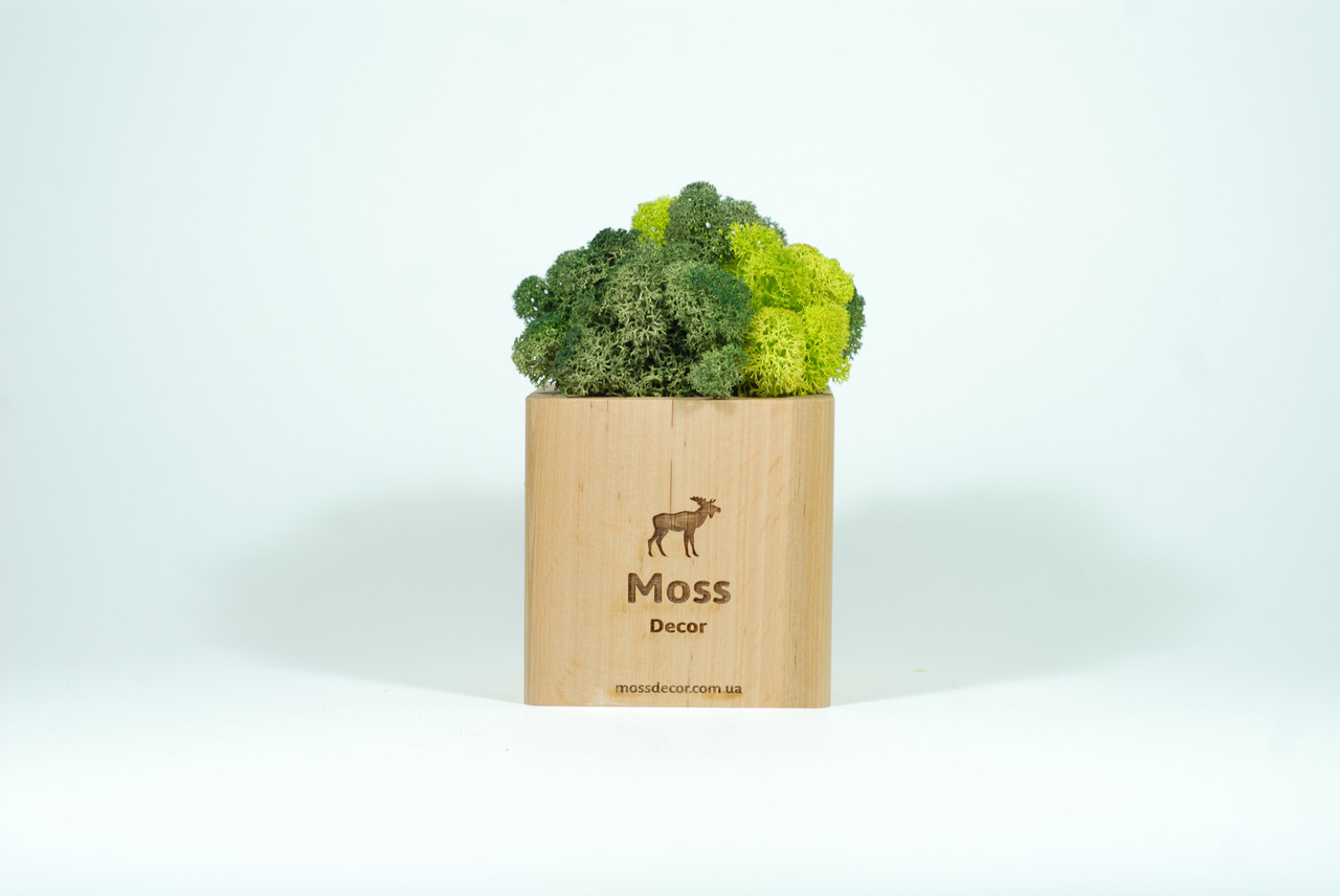 Брендированный экосувенир Moss Cube (светлое дерево) мох 54 + 55