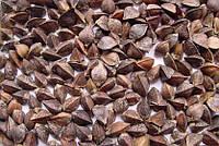 Семена гречихи крупнозернистых сортов -  Дикуль, Девятка.