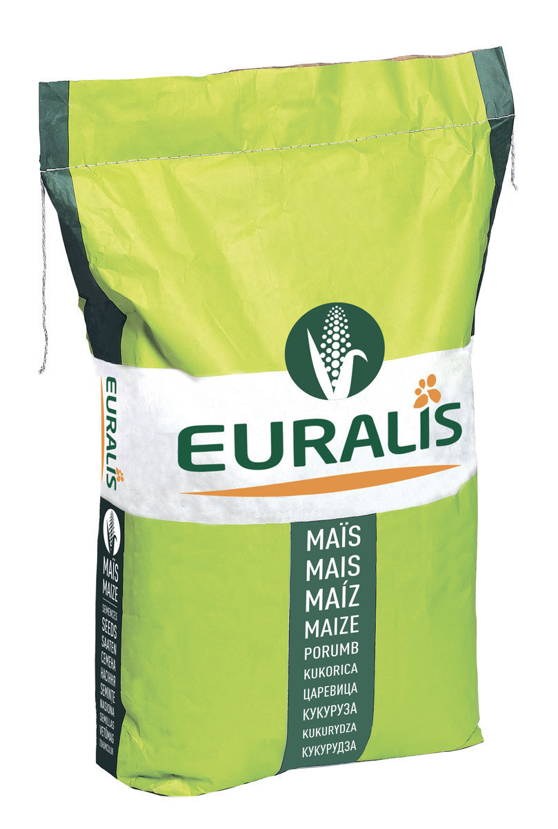 Гибрид кукурузы Euralis Милорд ЕС Пончо ФАО 380