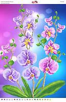 """""""Цветные орхидеи"""" СВ-2043 (А2). Полная вышивка"""