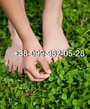 Белый клевер 1кг упаковка Пиполина Ривендел Юра Рома trifolium и др.сорта семена лилипут оптом для газона цена, фото 5