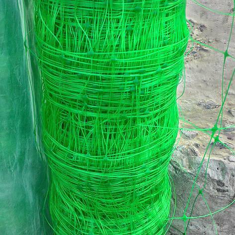 Венгерська сітка шпалерна, для вирощування огірків, рослин, квітів 1,7 м 50 м комірка 15х17, фото 2