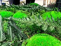 Фитокартина из стабилизированных растений, фото 1
