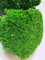 Стабилизированный мох кочковой