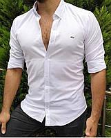 Рубашка мужская стильная белая Lacoste топ-реплика