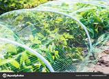 "Сетка ""Птичка"" защитная рулон 1х100м., ячейка 12х14 мм. (зеленая, черная) Клевер, фото 6"