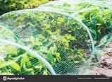 "Сетка ""Птичка"" 2х100м для защиты от птиц, рулон, ячейка 12х14 мм. (зеленая, черная) Клевер, фото 6"