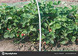 "Сетка ""Птичка"" 2х100м для защиты от птиц, рулон, ячейка 12х14 мм. (зеленая, черная) Клевер, фото 10"