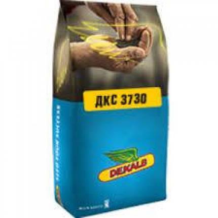Гибрид кукурузы Monsanto ДКС 3730 Акселерон Элит / ДКС 3730 Пончо ФАО 280, фото 2