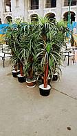 Аренда искусственной пальмы