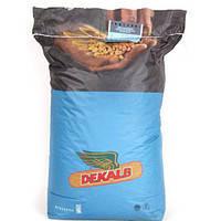 Гибрид кукурузы Monsanto ДКС 3705 укр Акселерон Стандарт ФАО 300, фото 2