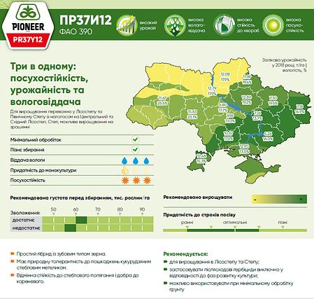 Гибрид кукурузы Pioneer ПР37И12 укр (ФАО 390), фото 2