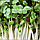 Брокколи Микрозелень, семена зерна брокколи органические Sadove 20 г., фото 7