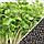 Брокколи Микрозелень, семена зерна брокколи органические Sadove 20 г., фото 2