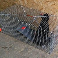 Гуманная Ловушка-клетка для котов и собак (аренда)