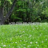 Клевер белый 300г семена 100% можно добавлять в газон использовать как цветущий карликовый, фото 3