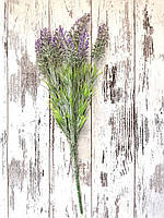 Цветы лаванды горной  (фиолетовый цвет)