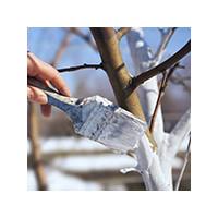 Раствор для побелки дерева весной, фото Sevenmart