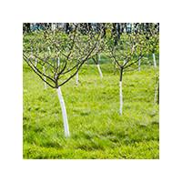 Побелка молодого дерева весной, фото Sevenmart
