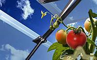 Автоматическая теплица для помидор 70000 м2