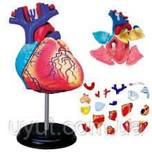 4D разобранный анатомический модель сердца человека анатомический медицинский школьный обучающий инструмент ан