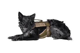 Szelki taktyczne dla psa - tan [Primal Gear], фото 3