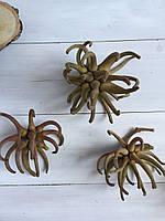 Сухоцветы SPIDERGUM морская звезда ( 8-10 см ) 3 шт