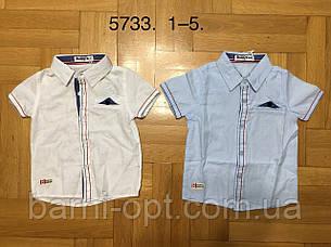 Сорочки на хлопчика оптом, Buddy boy , 1-5 рр, фото 2