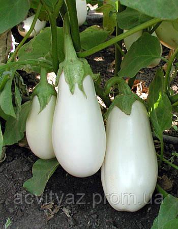 Семена баклажан Бибо-Bibo F1 - 1000 семян