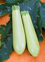 Семена кабачка Искандер F1 / Eskenderany F1 - 1000 семян