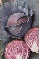 Семена капусты Ред Династи-Red Dynasty F1 - 2500 семян