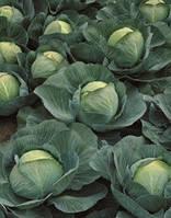 Семена капусты Атрия-Atria F1 - 2500 семян, фото 1