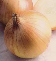 Семена лука Экзакта F1- Exacta F1 - 250 000 семян, фото 1